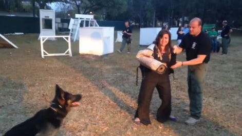 Reporter Melissa Montoya does K-9 training with the Cape Coral police department.