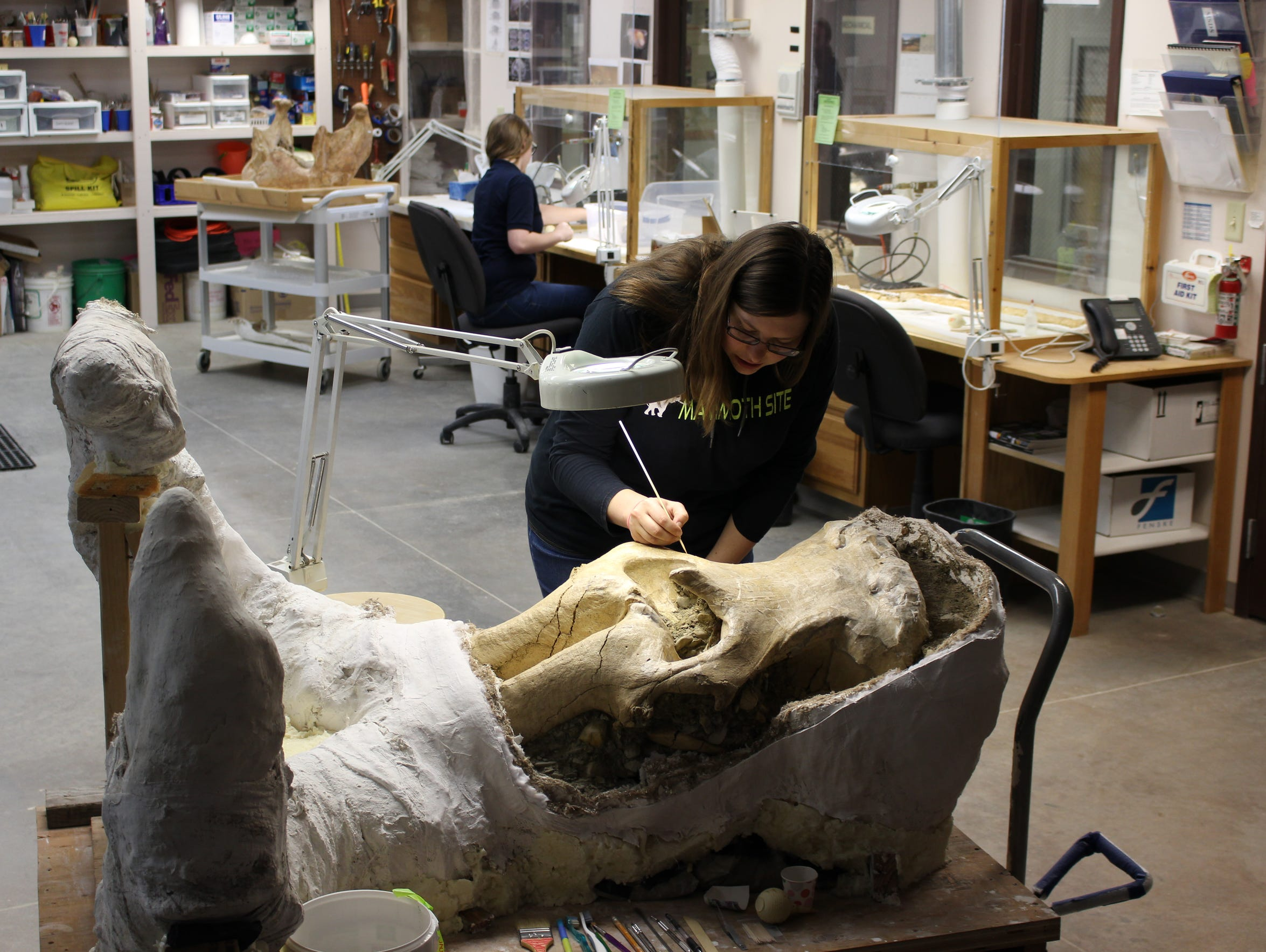 Preparator Monica Bugbee works on the skull at the