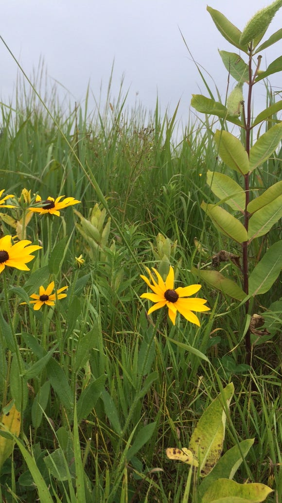 There are lots of pretty flowers at Mead Wildlife Area.