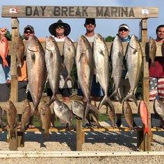 Amberjack, triggerfish seasons set to reopen in August