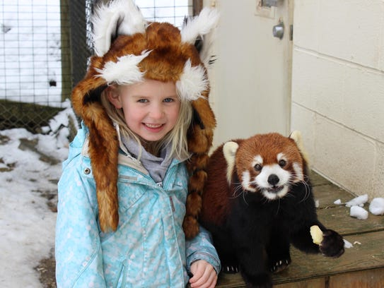 Booking a red panda Wild Encounter at the Binghamton