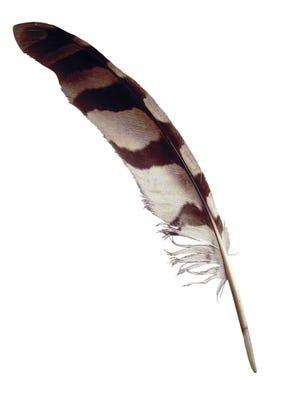 A quill pen.