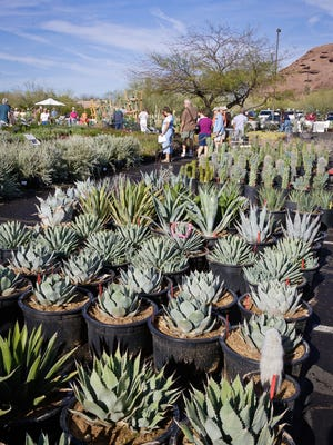 The Desert Botanical Garden's plant sale includes a variety of desert-adapted plants.