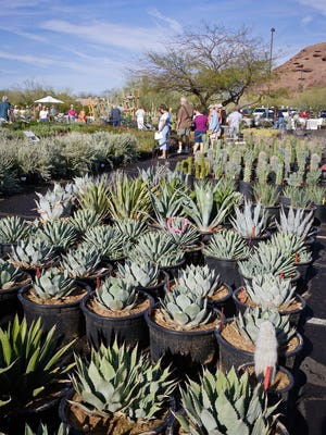 The Desert Botanical Garden plans to sell 30,000 plants at the Fall Plant Sale.