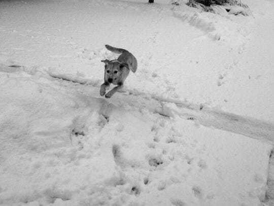 Pluto leaps through his snowy backyard Sunday.