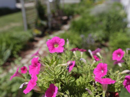 Photos of Julie Niziolek's garden at her Rothschild