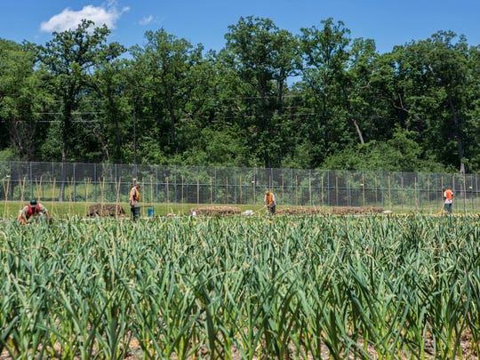Inmates work on the farms as part of the Horticulture