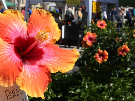 The Downtown Melbourne Botanical Fest is this Saturday.