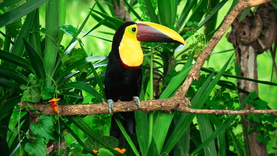 In Honduras Guided Nature Tours Introduce You To The