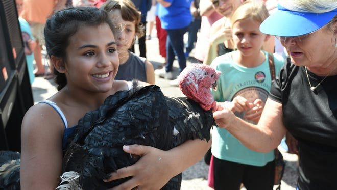 Sierra Martinez of Yellville cradles a turkey she caught after it was dropped from the stage during the 2017 Turkey Trot in downtown Yellville. The Mid-Marion County Rotary Club has announced that it will be the new sponsor of the 72-year-old event, but it will not permit live turkeys at the festival or allow them to be dropped from airplanes.