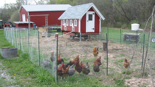 Due to the harsh weather, Arrowhead Spring Vineyards in Lockport, Niagara County, is using a heating unit in its chicken coop this winter.