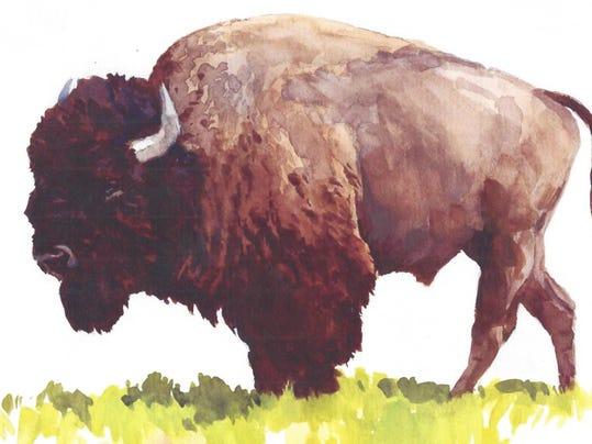 FAL 0608 Book Bison