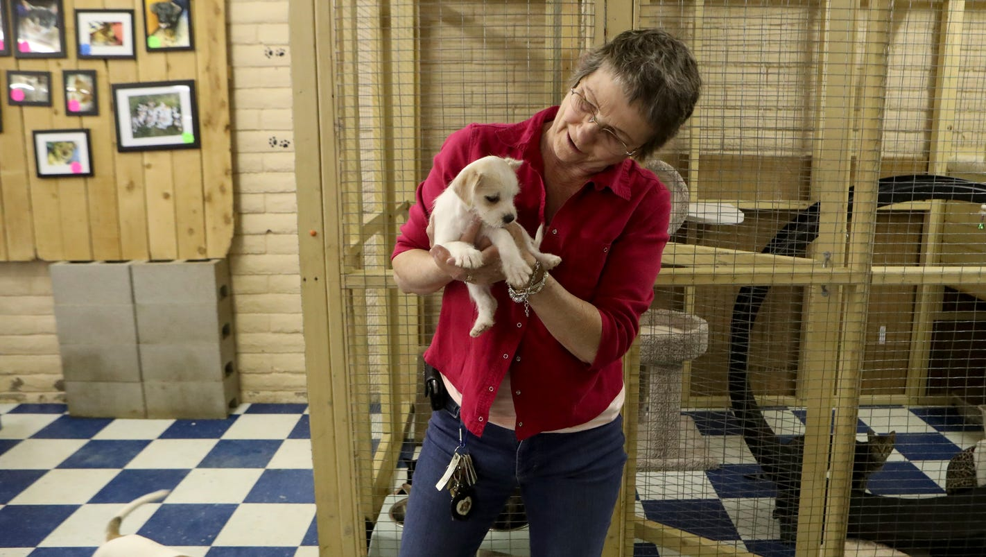 pet owners weigh in on anti puppy mill law