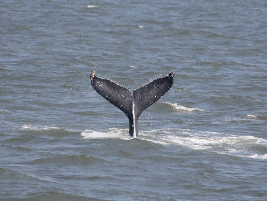 The Cape May Whale Watch Center offers a three-hour