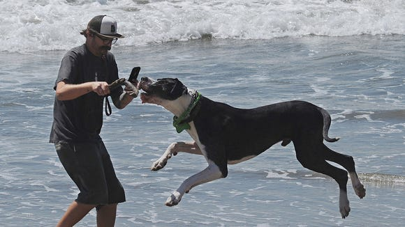 Thor McMkin and Bubba, a friend's great dane recently spent the day at Ventura Pier.