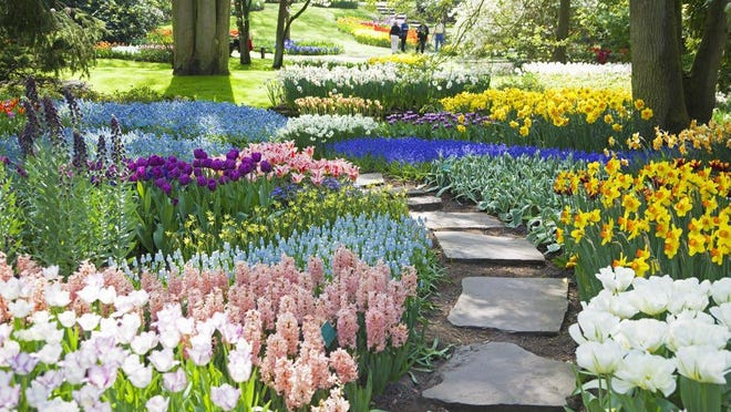 Spring-flowering bulbs are a great way to bring early color to a landscape.