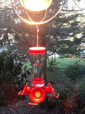 How To Prevent Your Hummingbird Feeder From Freezing