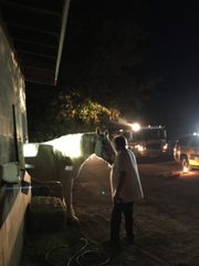 A horse became stuck in a block wall as it tried to get out of a corral Saturday night near Moorpark.