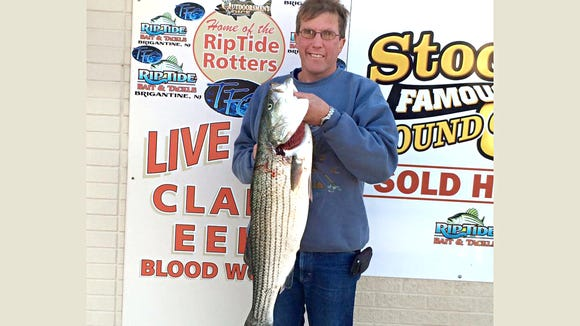 Arno Apel nailed a 19 lb. striper while live lining bunker. 11/15/15.