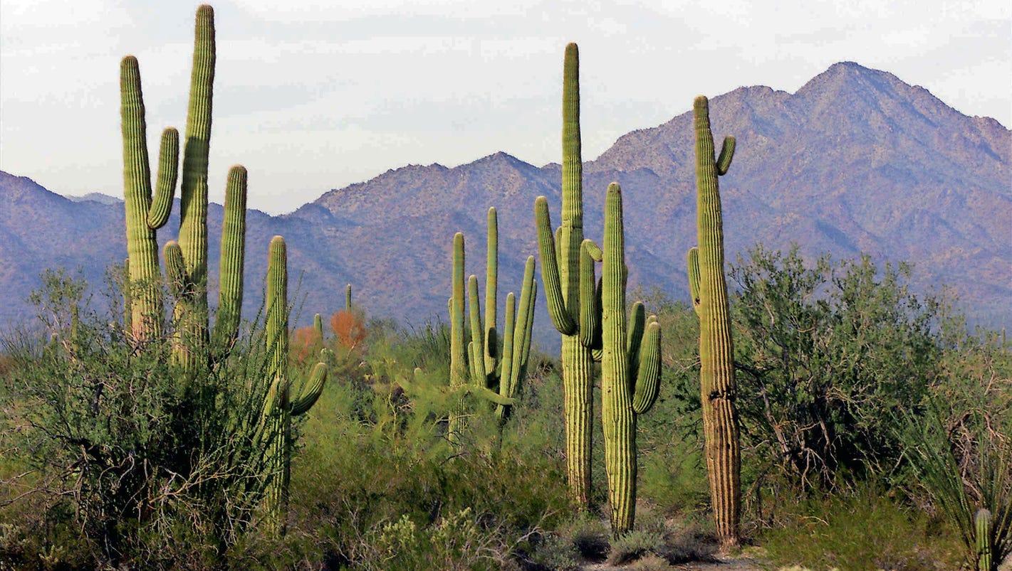 Desert View Apartments Phoenix Az