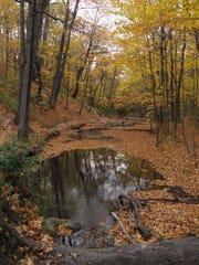Parson's Creek meanders through Hobbs Woods Nature