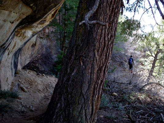 The unique landscape of Mesa Verde combines desert with forest; familiar sandstone with large Douglas firs and pines. (Molly Maxwell/Special to The Daily Times)