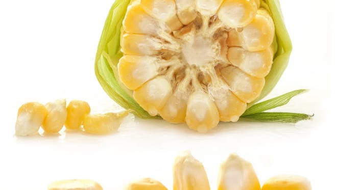 Cells within corn kernels have properties similar to those within human blood cells.