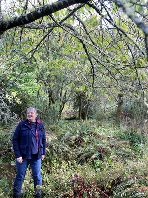 Terri Jones, a Navy forester, stands in an orchard on the Bangor submarine base. The orchards were planted by homesteaders.