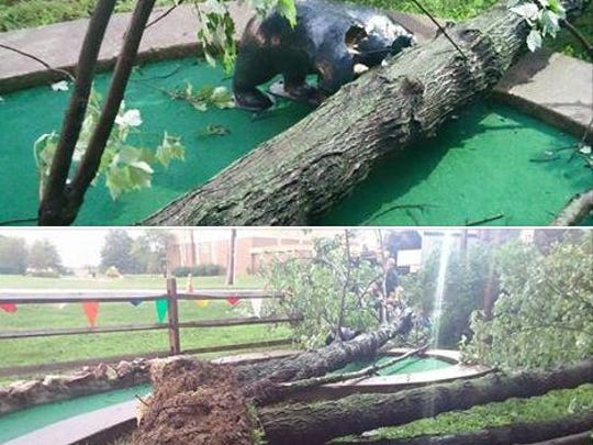Last week's storm brought down a large tree, damaging the Kodiak bear at one hole of the miniature golf course at Vince's Sports Center in Ogletown.