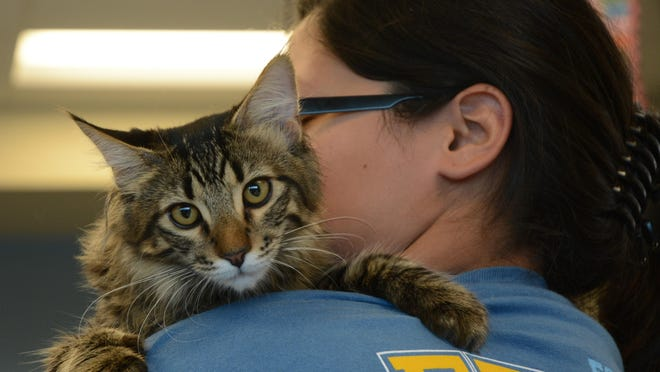 Lilliana Lopez, a senior at Indio High School, holds Bennie, a rescue cat. Lopez said she has learned a lot about caring for animals through the agriculture pathway classes.