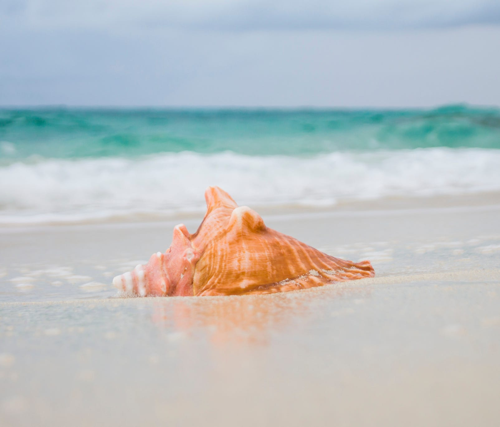 It is illegal to take conch shells with living organisms from Florida beaches.