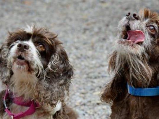 636118838317943634-lollypop-farm-senior-dogs-Together.jpg