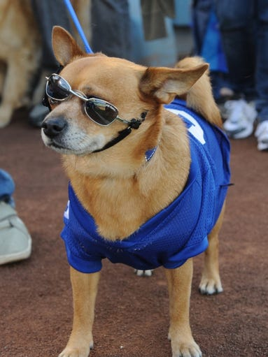 dog days of summer petco park 2015 application