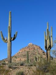 Saguaros frame Rock Peak in San Tan Mountain Regional