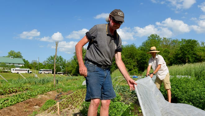 Volunteer Warren Wimer of Staunton helps project manager Trevor Piersol with pulling back a reemay garden blanket from a row of cool season vegetables. The Allegheny Mountain Institute Urban Farm at Virginia School for the Deaf and the Blind held one of their community workdays in Staunton on Tuesday, May 19, 2015.
