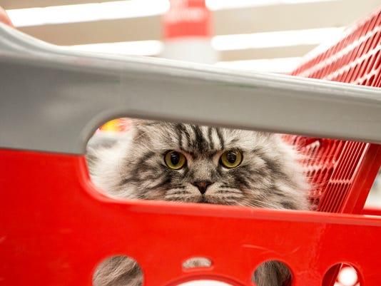 636551968685179049-022218-Target-cat-01.jpg