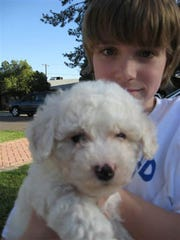 Sawyer was a different boy when he got the puppy he