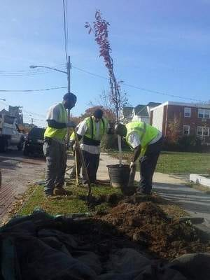 The NJ Tree Foundation's Green Streets crew planting trees in Asbury Park.