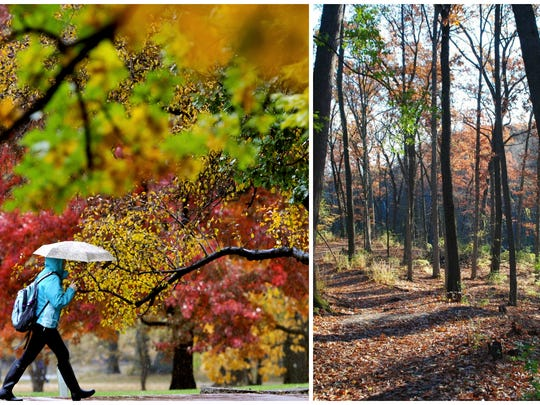 Which campus has better fall color?