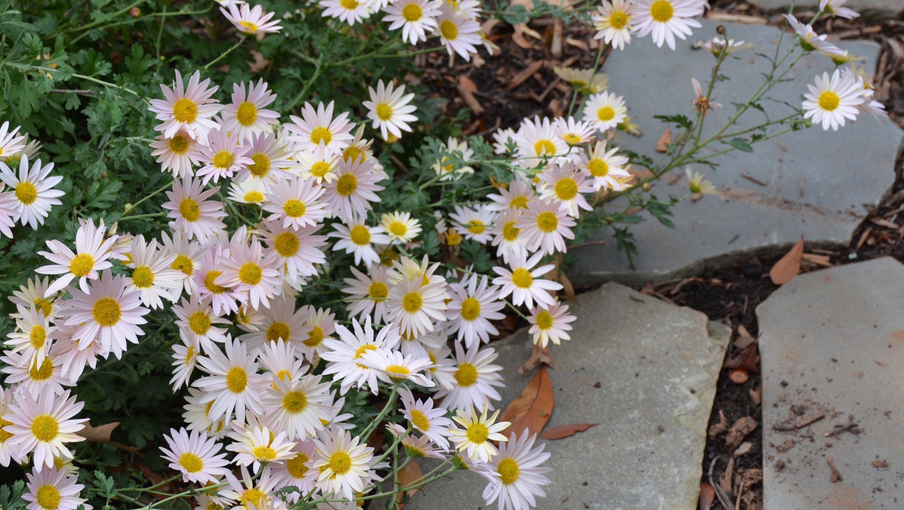 Get extra flower power with fall blooming perennials - Fall blooming flowers ...