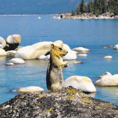 Five secluded Tahoe beaches to hit this summer