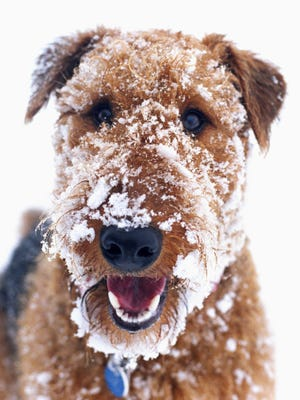 Residents should make sure their dogs housed outside are warm and dry in subzero weather, officials said.