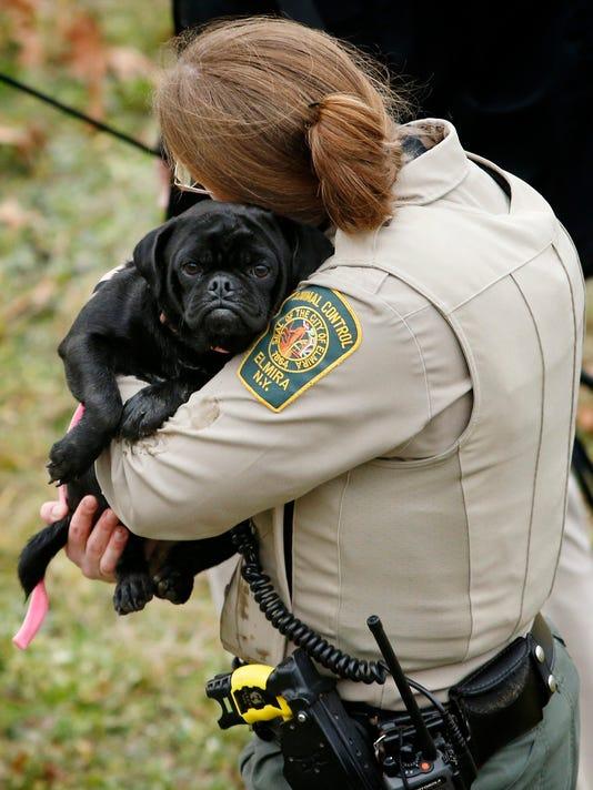 20151216 Dog Rescue