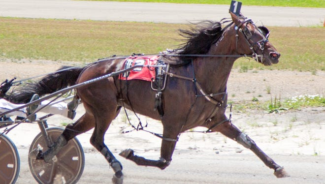Wings of Royalty, shown here winning a New York Sire Stakes race at Buffalo Raceway on July 19, will race at Batavia Downs in Friday's fourth race. He competed in the $1 million Hambletonian on Aug. 8 at the Meadowlands.