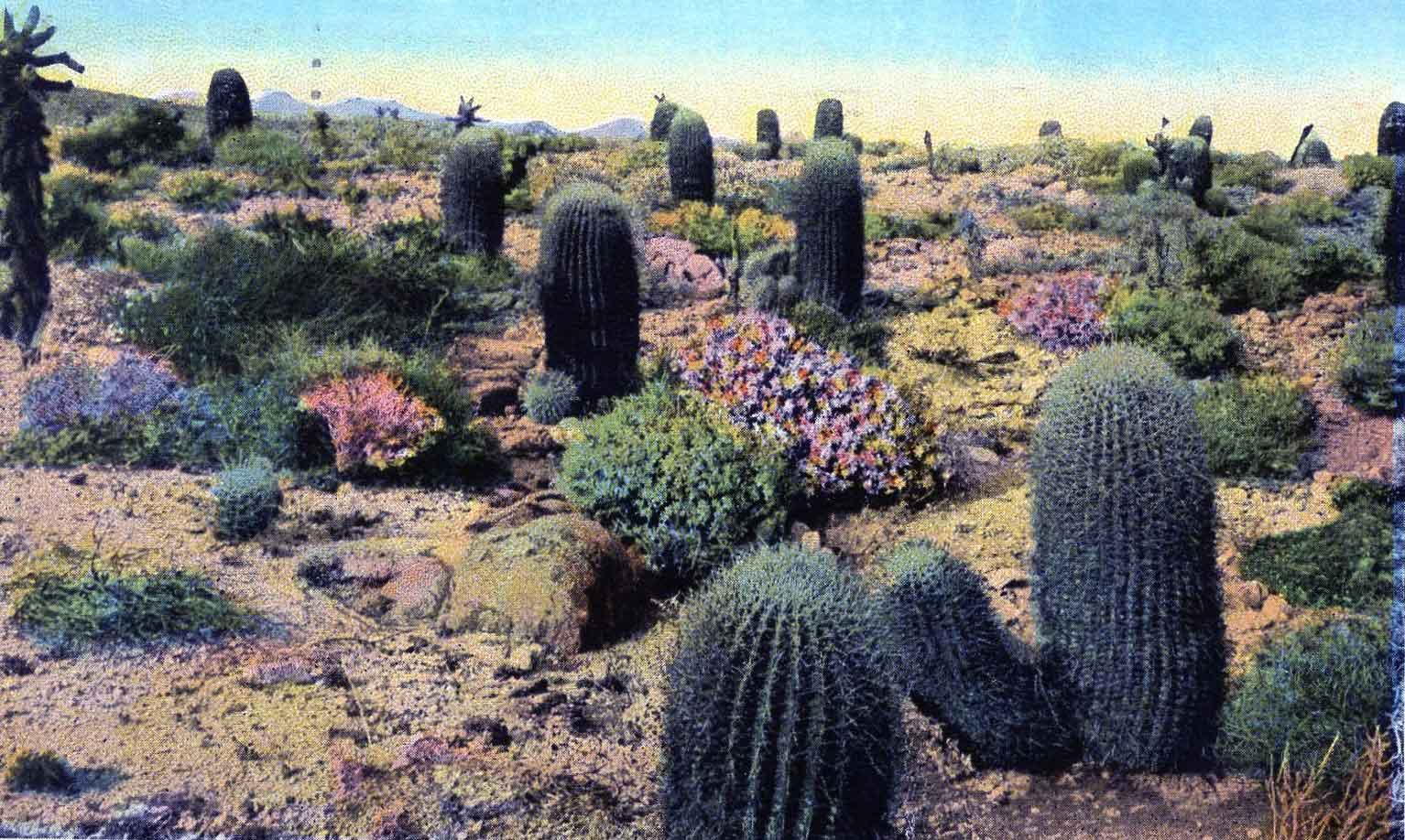 The rich history of desert gardening the Coachella Valley and beyond