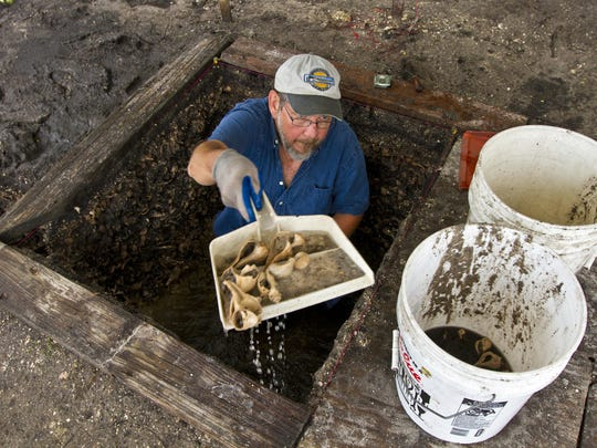Bill Marquardt, curator in South Florida archaeology and ethnography at the Florida Museum of Natural History, removes some of the dirt, sediment and shells during an archaeological dig Monday morning at a private residence just east of Waterfront Drive in Pine Island.
