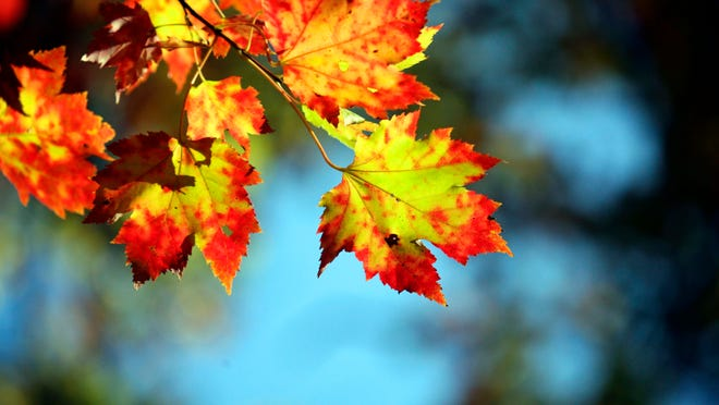 Once the leaves on your trees start to fall, have a strategy in mind for how to rake them up.