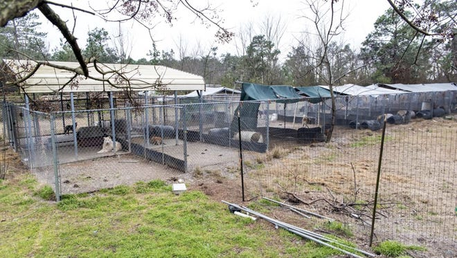 ASPCA helped seize more than 300 dogs, 250 cats, 40 horses and other farm animals Jan. 27, 2016, from The Haven animal shelter in Raeford, N.C. Its owners have been charged with animal cruelty.