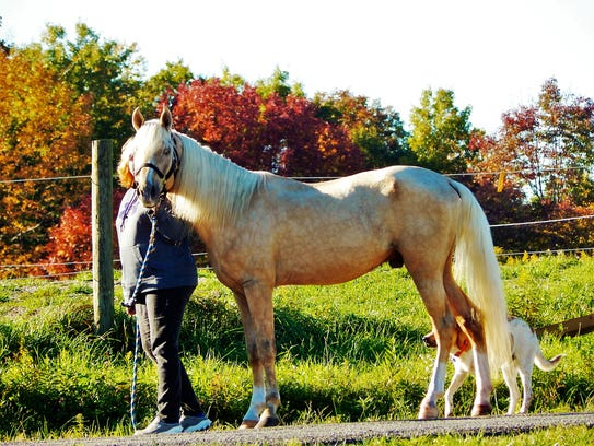 Cider is a rescue horse saved by Bev Dee and her team