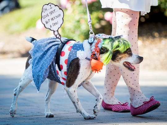 Dogs dressed in a variety of costumes at the Howl-O-Ween Pooch Parade held at UT Gardens in Knoxville on Sunday, Oct. 23, 2016.